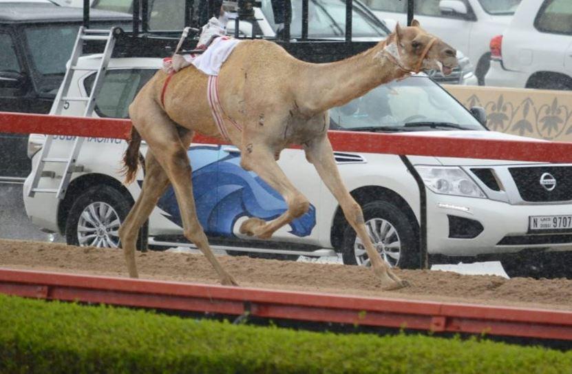 مهرجان سمو ولي عهد دبي - المرموم - الأحد 2019/02/03